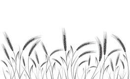 Svart vete som isoleras på vit bakgrund Royaltyfri Foto