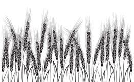 Svart vete som isoleras på vit bakgrund Royaltyfria Foton