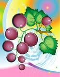 Svart vinbär Arkivfoto