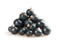 svart vinbär Royaltyfria Foton