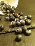 svart vinbär arkivbild
