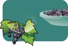 svart vinbär Royaltyfri Bild
