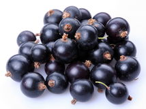 svart vinbär royaltyfri foto