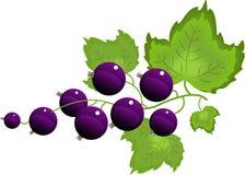 svart vinbär stock illustrationer