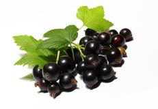 svart vinbär för bär Arkivbild