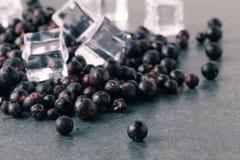 Svart vinbär för djupfrysta bär arkivfoto