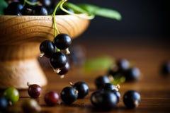 Svart vinbär för mogna bär Royaltyfri Fotografi