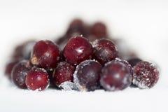 Svart vinbär för nya bär under en isfilt i den varma sommaren Bon Appetit royaltyfri fotografi