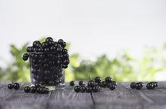 Svart vinbär i ett exponeringsglas Arkivfoton