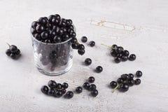 Svart vinbär i exponeringsglaset Royaltyfri Fotografi