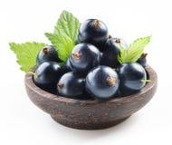svart vinbär isolerad white royaltyfri foto