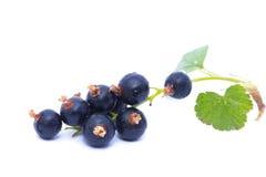 Svart vinbär med det gröna bladet som isoleras på vit bakgrund Royaltyfria Foton