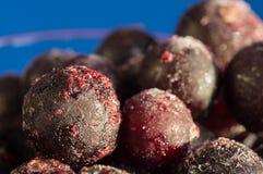 Svart vinbär som täckas med rimfrost på en blå bakgrund Arkivfoton