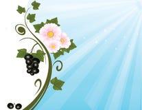 Svart vinbärbakgrund Royaltyfri Fotografi
