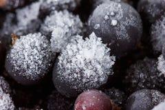 Svart vinbärbakgrund som täckas med is och snö arkivbilder