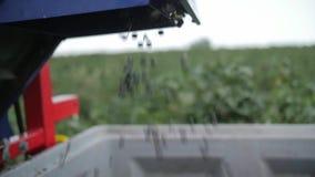 Svart vinbärmaskinskörd i ultrarapid stock video