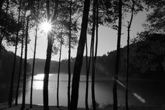 svart white Royaltyfria Foton