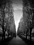 svart white Royaltyfria Bilder