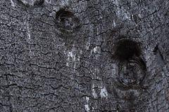 Svart wood kol fotografering för bildbyråer