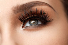svarta ögonfranser long Härligt kvinnligt öga för Closeup med makeup royaltyfria foton