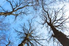 Svarta avlövade träd Arkivfoto