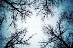 Svarta avlövade trädkonturer över mörk himmel Royaltyfri Fotografi