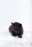 svarta blåa kattögon Arkivbild