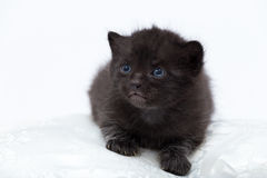 svarta blåa kattögon Arkivfoton