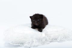 svarta blåa kattögon Royaltyfria Foton
