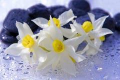 svarta blommastenar Royaltyfria Bilder