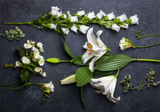 svarta blommor för bakgrund Arkivbilder