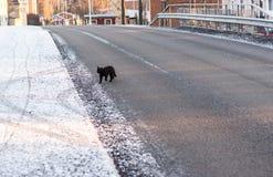 Svarta Cat Crossing Road Fotografering för Bildbyråer