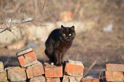 Svarta Cat Guard royaltyfria bilder
