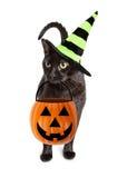 Svarta Cat Halloween Witch Royaltyfri Bild