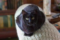 Svarta Cat Indoors Royaltyfri Bild