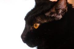 Svarta Cat Profile Portrait Royaltyfri Foto