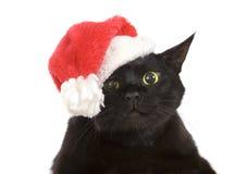 Svarta Cat Santa - gullig jul katt, julhusdjur med jultomten C royaltyfria foton