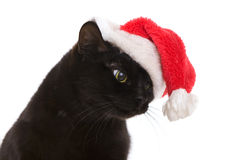 Svarta Cat Santa - gullig jul katt, julhusdjur med jultomten C Royaltyfri Foto