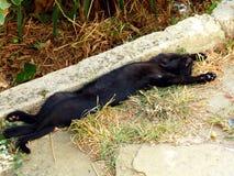 Svarta Cat Sunbathing Fotografering för Bildbyråer