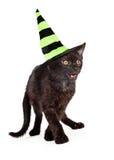 Svarta Cat Wearing Halloween Witch Hat arkivbild