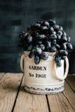 Svarta druvor i gammal krus på trätabell- och mörkerbakgrund Fotografering för Bildbyråer