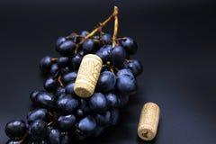 Svarta druvor och två vinkorkar på svart bakgrund royaltyfri bild