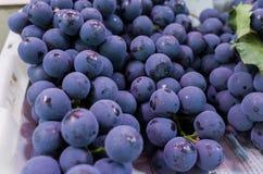 Svarta druvor på marknad arkivbild