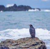 Svarta Eagle Drake Bay Views runt om Costa Rica Arkivbild