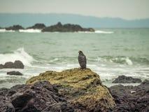Svarta Eagle Drake Bay Views runt om Costa Rica Royaltyfri Fotografi
