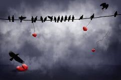 Svarta fåglar med hjärtor Arkivbilder