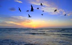 Svarta fåglar som kontrasterar till den färgrika soluppgången Arkivfoto