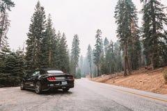 Svarta Ford Mustang GT 5 0 resande till och med den Yosemite nationalparken Royaltyfria Foton
