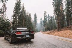 Svarta Ford Mustang GT 5 0 resande till och med den Yosemite nationalparken Royaltyfri Fotografi