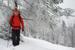 Svarta Forest Hiker i vinter Royaltyfri Bild